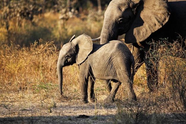 Retrato de elefante