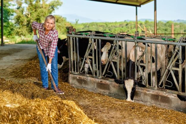 Retrato de fazendeiro alimentando vacas na fazenda.