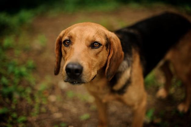Retrato de filhote de cachorro marrom em pé na floresta