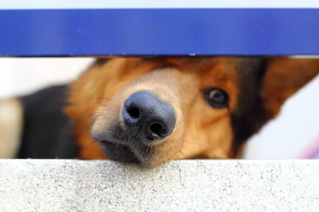 Retrato de focinho de cão triste sozinho olhando pequeno buraco