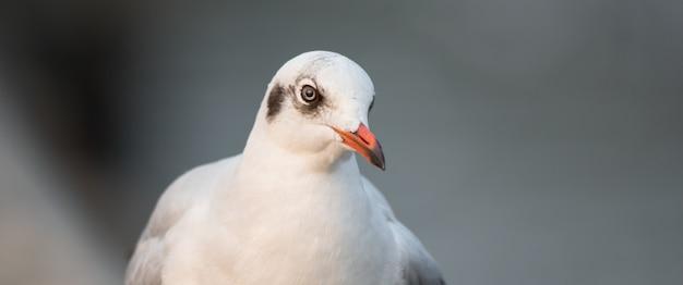 Retrato de gaivota bonito Foto Premium