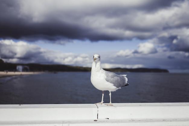 Retrato de gaivota contra a costa do mar