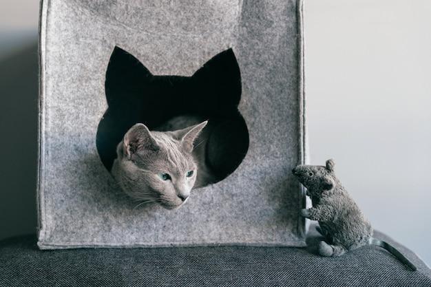 Retrato de gatinho cinzento divirta-se com o mouse de brinquedo na casa do gato.