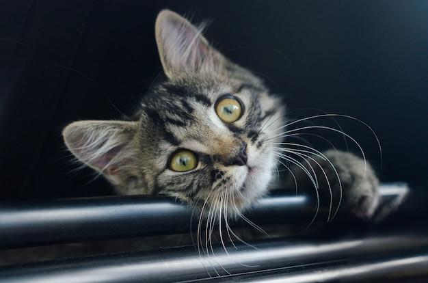Retrato de gatinho listrado fofo