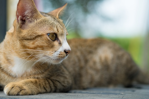 Retrato de gato amarelo no caminhão.