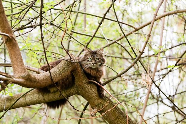Retrato de gato assustado, sentado na árvore