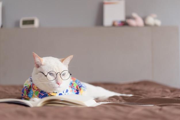 Retrato, de, gato branco, desgastar, óculos, e, livro leitura