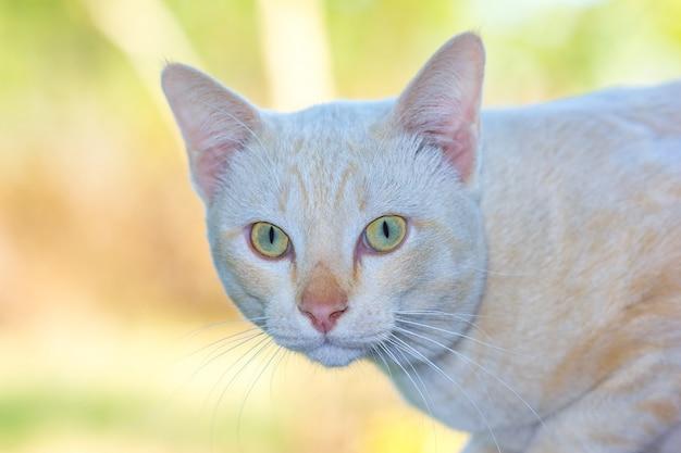 Retrato de gato closeup
