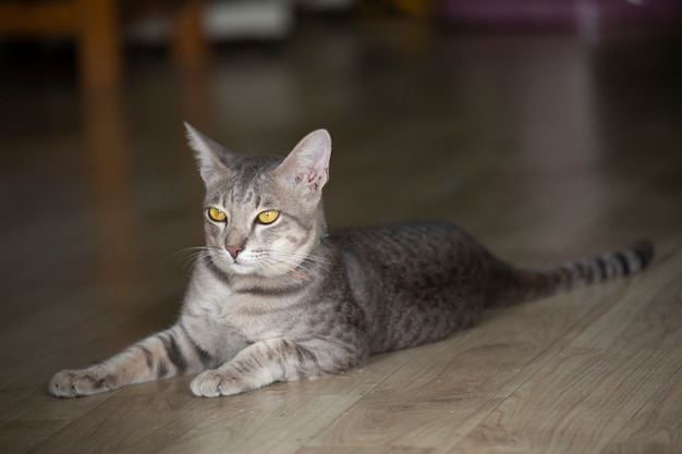 Retrato de gato com fundo desfocado.