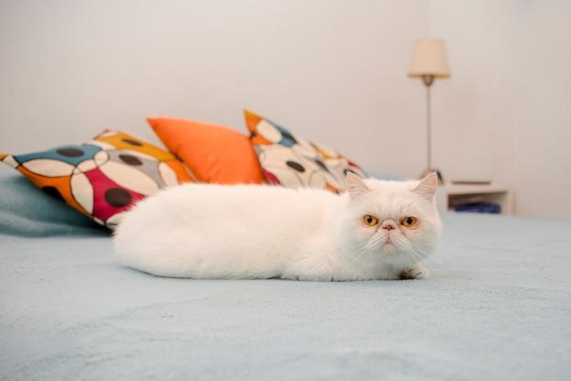Retrato de gato gatinho doméstico