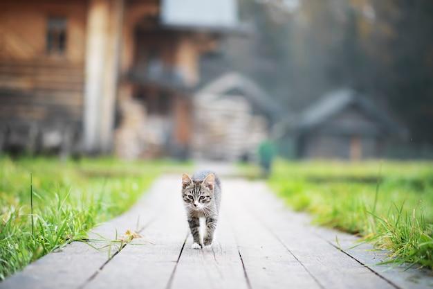 Retrato de gato listrado, close-up gatinho cinzento fofo, retrato de gato descansando