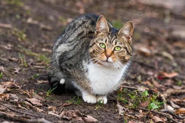 Retrato de gato malhado de março de primavera em folhas secas. a vida na rua de um gato de olhos verdes.