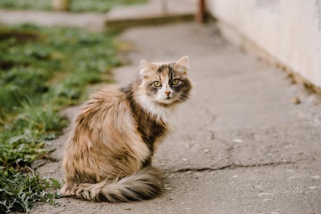 Retrato de gato multicolor com olhos verdes