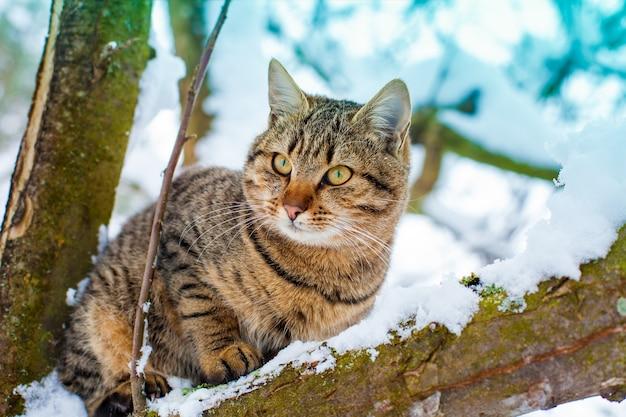 Retrato de gato na árvore nevada no inverno