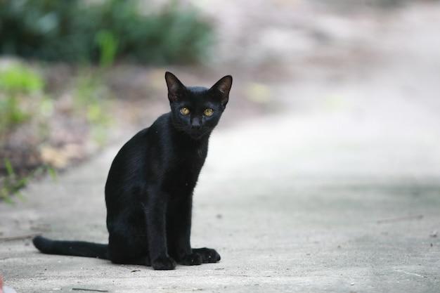 Retrato de gato preto na rua