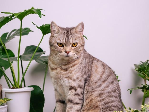 Retrato de gato ruivo na mesa de madeira com plantas da casa purificação do ar monstera planta cobra filodendro no quarto