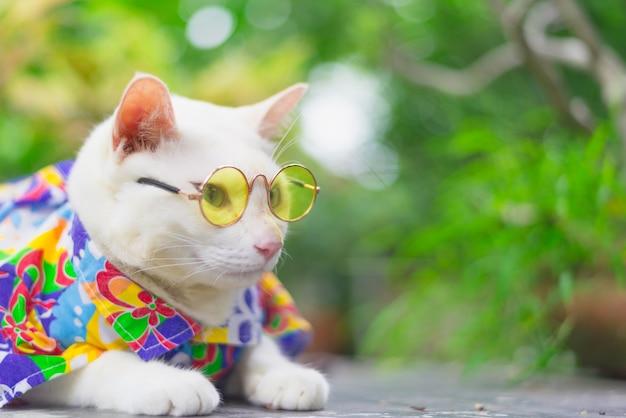 Retrato, de, hipster, gato branco, desgastar, óculos de sol, e, camisa