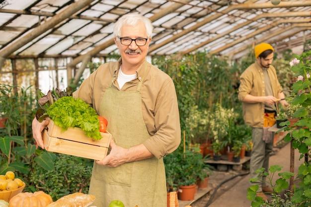 Retrato de homem bonito sênior sorridente com avental em pé com uma caixa de legumes em uma estufa moderna