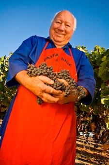 Retrato, de, homem, segurando, colhido, uvas