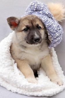 Retrato de inverno de um cachorrinho