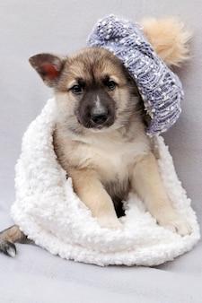 Retrato de inverno de um cachorrinho Foto Premium
