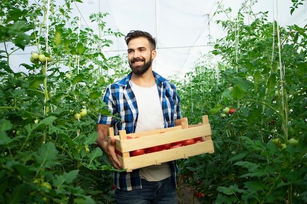 Retrato de jovem agricultor sorridente com tomate vegetal recém-colhido e parado no jardim da estufa