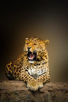 Retrato de leopardo com olhos intensos em fundo escuro