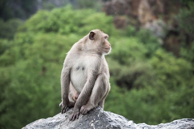 Retrato de macaco em pedra