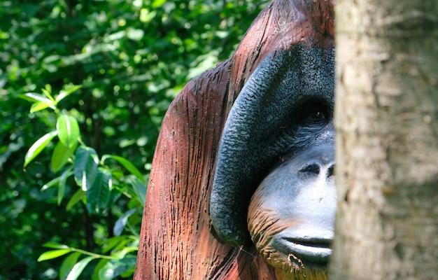 Retrato de macaco urangutan de madeira em um dia ensolarado