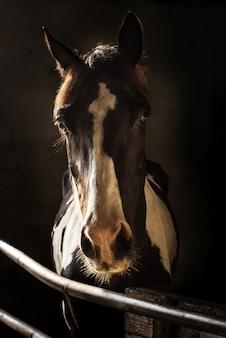 Retrato, de, maravilhoso, ladre cavalo, em, estável, baixa luz