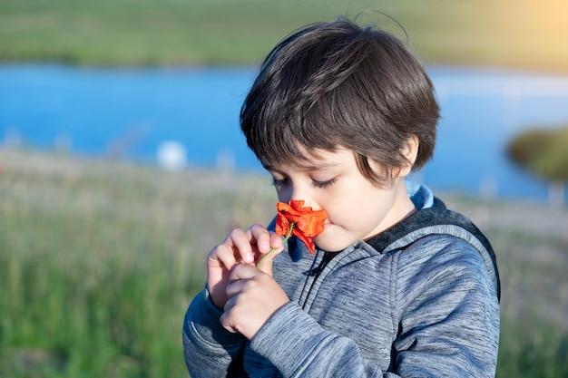 Retrato de menino adorável cheirando flor, criança de tiro cândido cheiro de aprendizagem sensorial de papoula, explorador de crianças e aprendendo sobre a natureza selvagem no campo, atividade de acampamento de verão ao ar livre para crianças