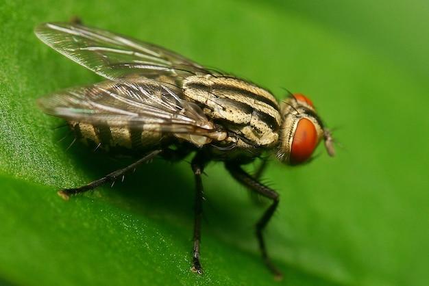 Retrato de mosca macro