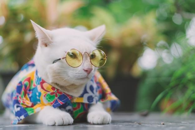 Retrato de óculos de sol vestindo do gato branco do moderno e da camisa, conceito animal da forma.