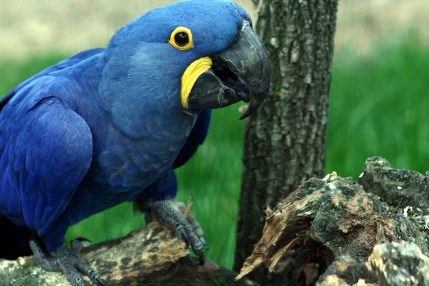 Retrato de papagaio colorido em um zoológico