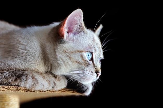 Retrato de perfil de um gatinho