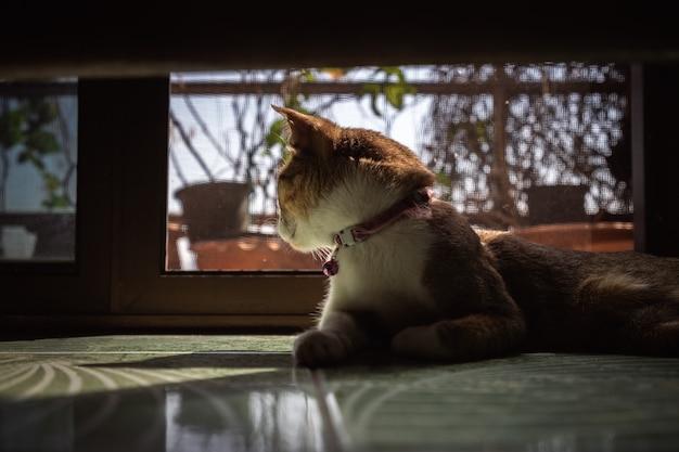 Retrato, de, tabby doméstico, gato, ligado, chão