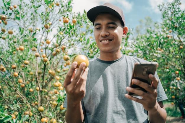 Retrato de um agricultor checando as condições de suas laranjas e anotando com um celular em um campo de laranjeira