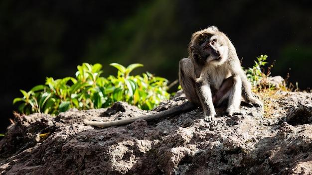 Retrato de um animal. macaco selvagem. bali. indonésia