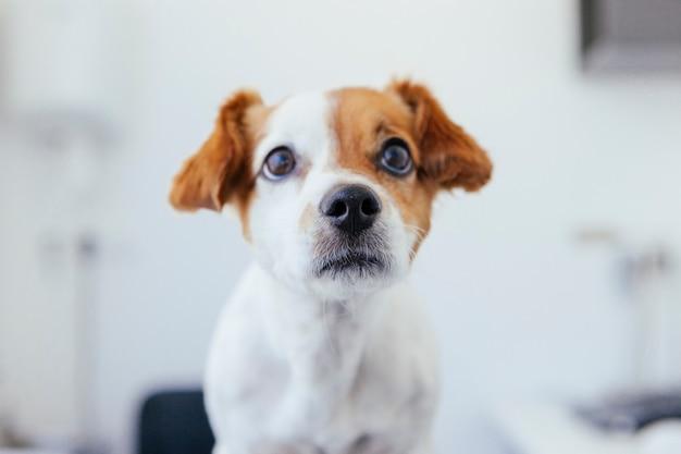Retrato de um cachorrinho fofo em uma clínica canina
