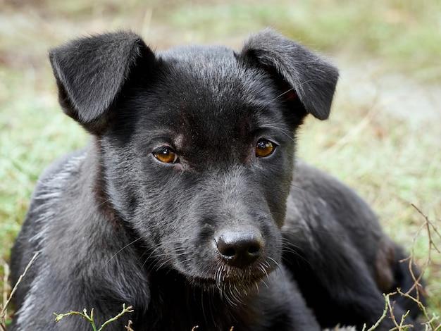 Retrato de um cachorrinho preto