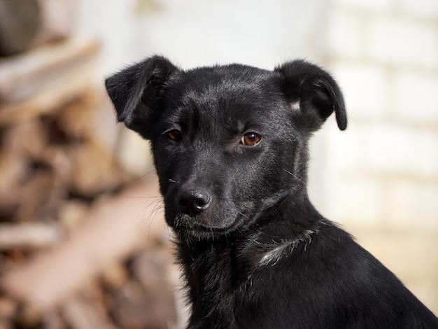 Retrato de um cachorrinho preto.