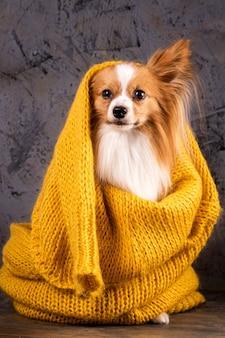 Retrato de um cachorro em um fundo cinza brutal