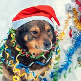 Retrato de um cachorro enredado em enfeites coloridos e usando um chapéu de papai noel