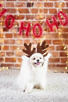 Retrato de um cachorro fofo com chifres de rena