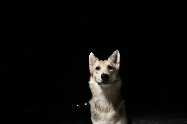Retrato de um cachorro no campo à noite