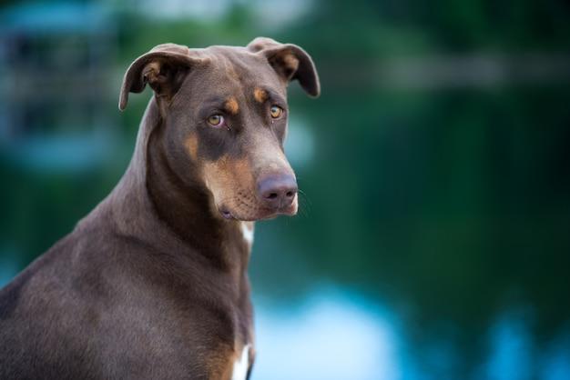 Retrato de um cachorro olhando para trás perto do lago