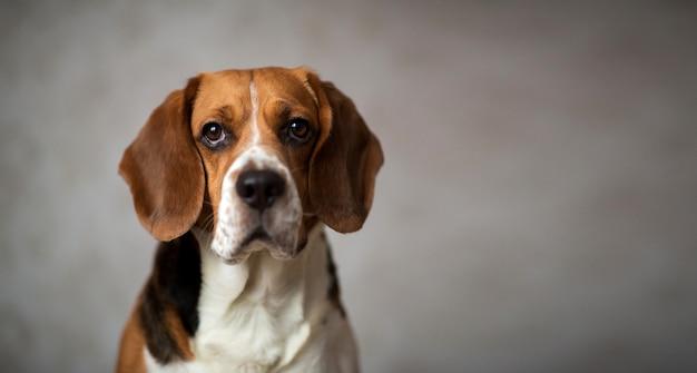 Retrato de um cachorro sentado em uma cama de cachorro