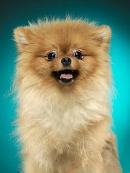 Retrato de um cachorro