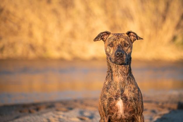 Retrato de um cão de raça misturada no rio com luz natural do sol