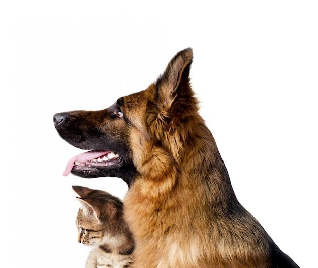 Retrato, de, um, cão, e, um, gato